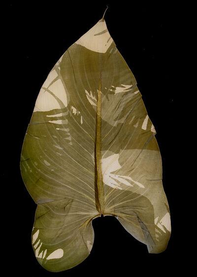 Binh Danh, 'Military Foliage #19', 2010