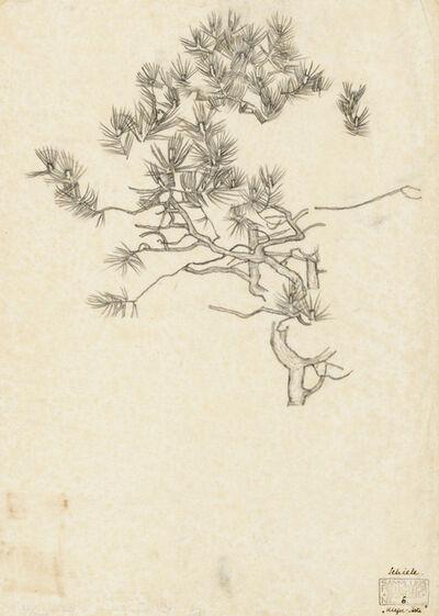 Egon Schiele, 'Pine Branches', 1915