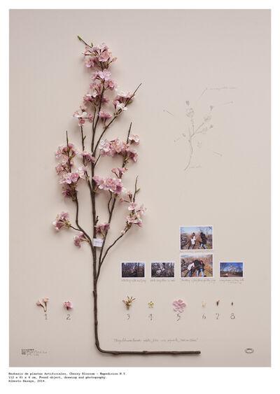 Alberto Baraya, 'Cherry Blossom - Herbario de Plantas Artificiale', 2014