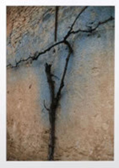Ralph Gibson, 'Blue Vine, Bourgogne'