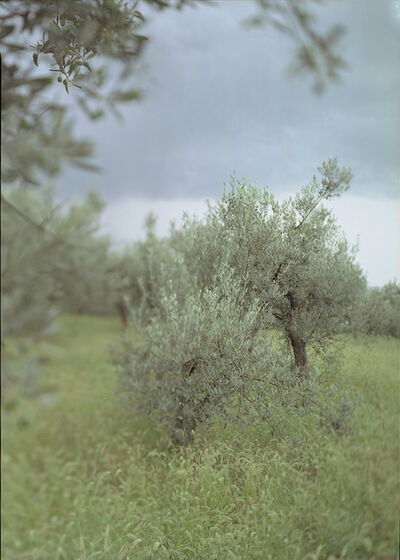 Joann Verburg, 'Little Green Tree (with Olives)', 2003