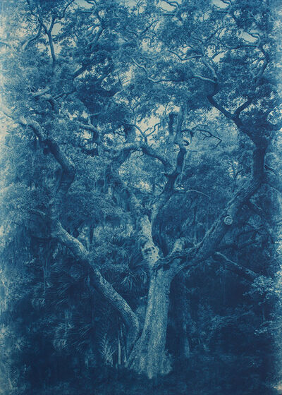 Thomas Hager, 'Cedar Point Live Oak 2/12', 2015
