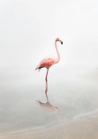 Alice Zilberberg, 'For Now Flamingo', 2019