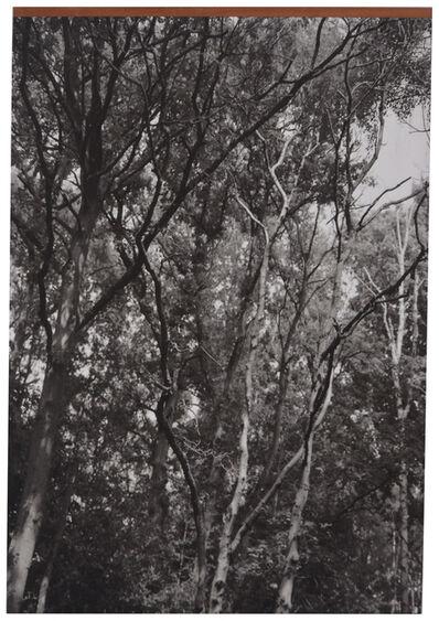 Grace Ndiritu, 'Trees # 1', 2014