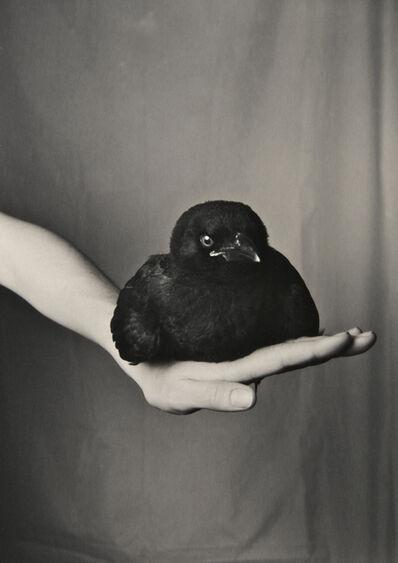 Robert Langham III, 'Fledgling American Crow', 2014