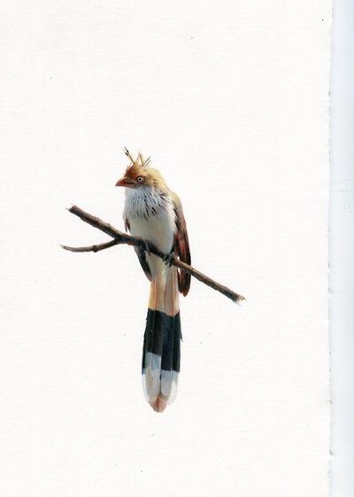 Dina Brodsky, 'Cuckoo', 2019