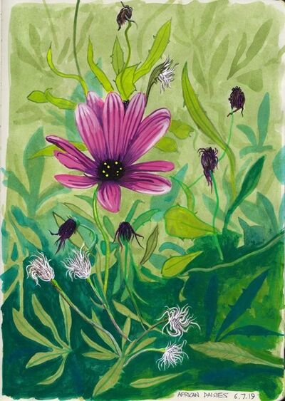Cole Case, 'African Daisies, 6.7.19', 2019