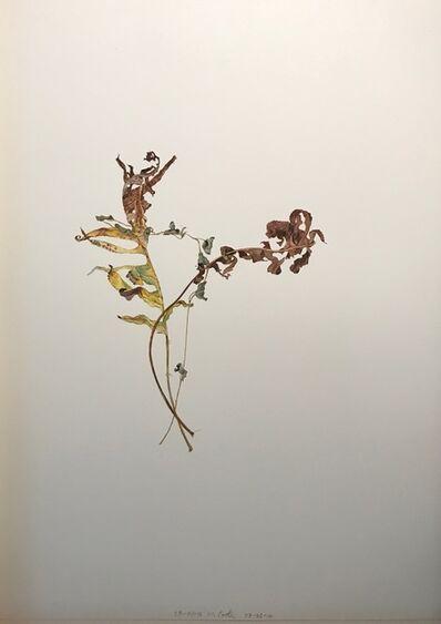 Michael Porter, 'Overlapping Leaves series, 23-7-14, 7-8-14', 2014