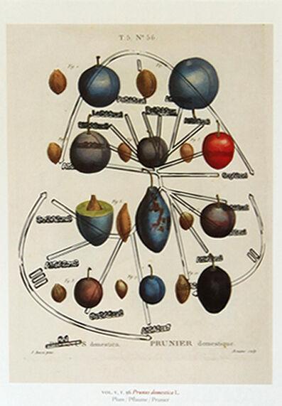 Pedro Neves Marques, 'Plum (Duhamel de Monceau: 1801-1819) + Plum amino acid family (2008)', 2017