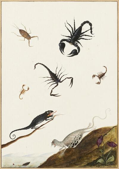 Nicolaas Struyk, 'Lizards and crustaceans', ca. 1719