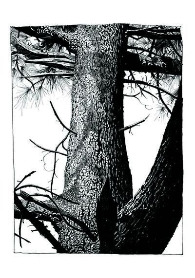 Jamie Hewlett, 'Pine 4', 2015