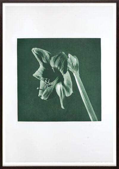 Robert Mapplethorpe, 'Green Amarylis', 1987