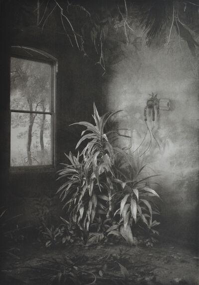 Suzanne Moxhay, 'Vegetation Under Window', 2019