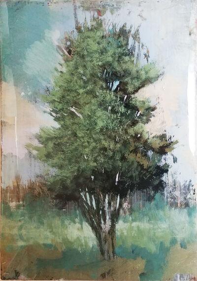 Peter Hoffer, 'Cedar', 2018
