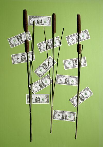 Annette Kelm, 'Money Tree', 2015