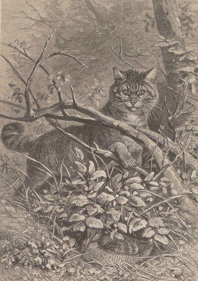 Unknown, 'A Cat Hidden in the Tree', 1880