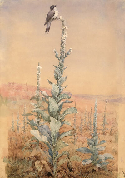 Fidelia Bridges, 'Untitled (Kingbird on Verbascum Stalk)', 1877