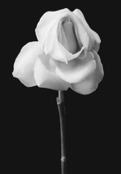 Andrea M Baldeck, 'Long Stemmed Rose', 1998