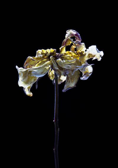 Carla van de Puttelaar, 'Hortus Nocturnum', 2010-2012