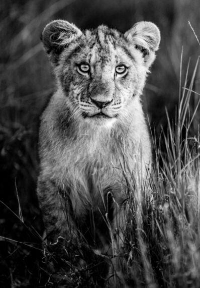 James Lewin, 'Curious Cub, Borana, Kenya.', 2020