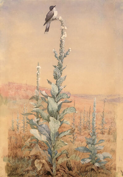 Fidelia Bridges, 'Summer Song – Kingbird on Verbascum stalk ', 1877