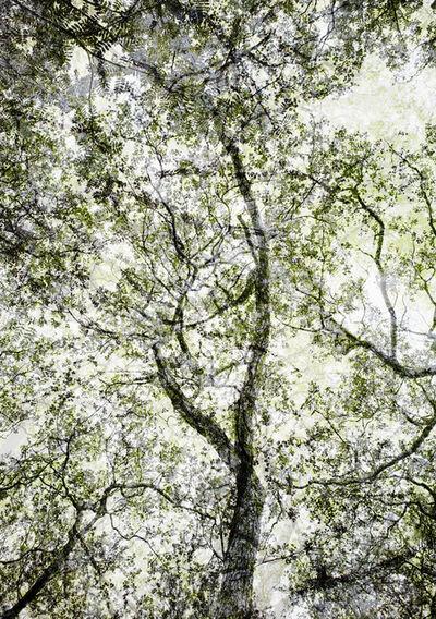 Santeri Tuori, 'Forest #4', 2010-2011