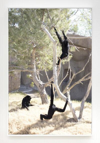 Barak Zemer, 'Black Monkeys', 2017