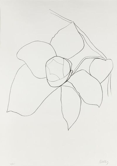 Ellsworth Kelly, 'Camellia II (from Suite of Plant Lithographs)', ca. 1964-1965