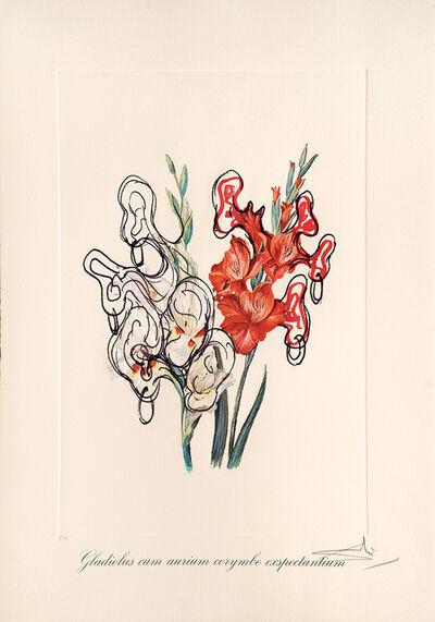 Salvador Dalí, 'Gladiolus cum aurium corymbo expectantium. (Pirates Gladioli.)', 1972