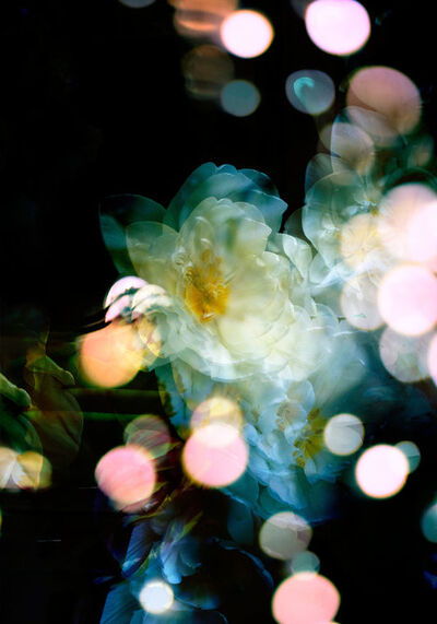 Isabelle Menin, 'Petites Natures #3', 2015