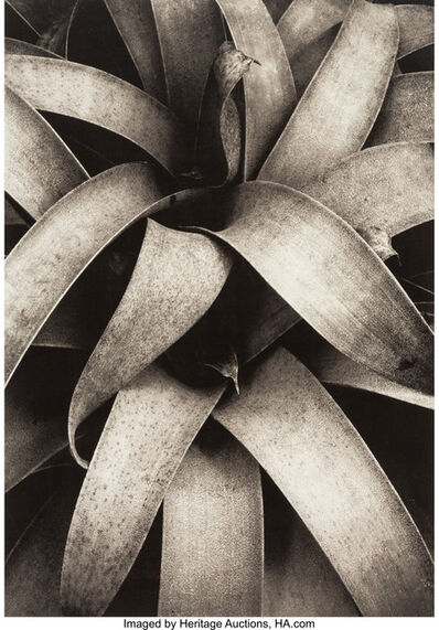 Kipton Kumler, 'Reeds, Wollesley, Fronds, Wollesley, and Succulent Plant (three photographs)', 1971; 1972; 1977