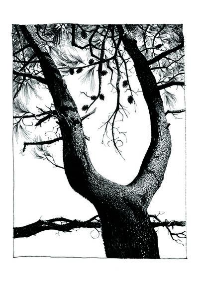 Jamie Hewlett, 'Pine 12', 2015