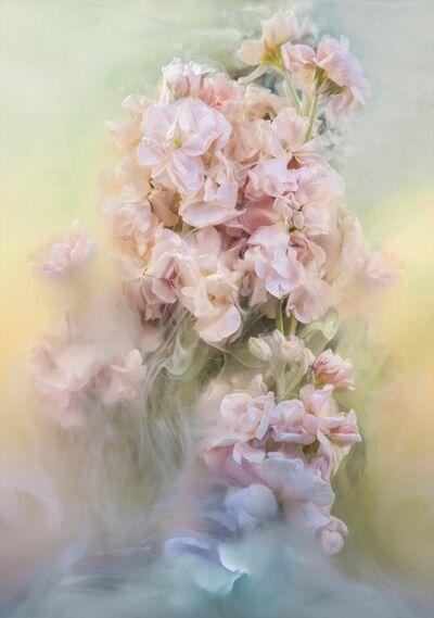 Javiera Estrada, 'Butterflies', 2017