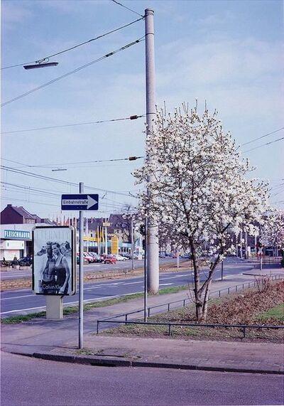 Max Regenberg, 'Magnolie #1996, L.B. System Köln-Mühlheim', 2012