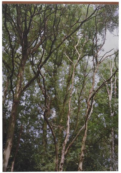 Grace Ndiritu, 'Trees # 2', 2014
