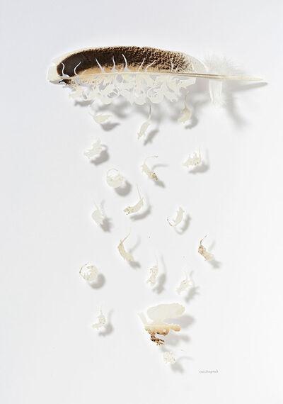Chris Maynard, 'Rodent Rain 2', 2012