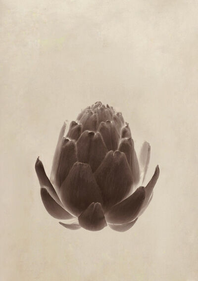Jitka Hanzlová, 'Fish Friends Flowers # 11', 2012