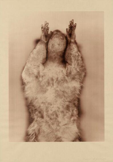 Ann Hamilton, 'Brown Greater Galago (Sepia)'