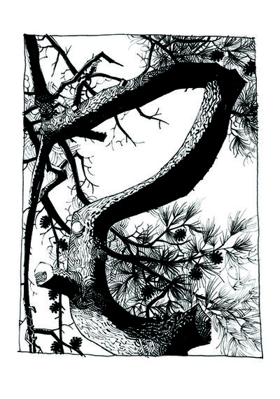 Jamie Hewlett, 'Pine 1', 2015