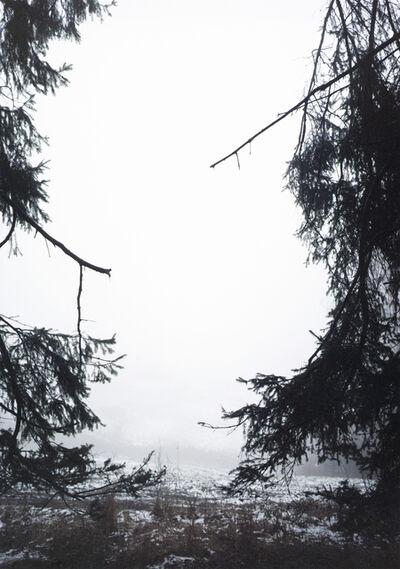 Jitka Hanzlová, 'Forest #30, Untitled (Split)', 2005