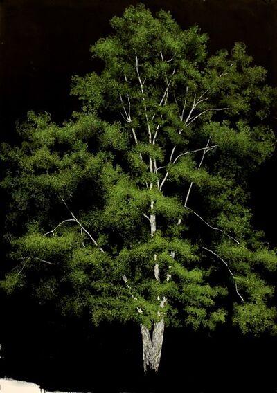 Sarah Myers, 'Birch Tree', 2015
