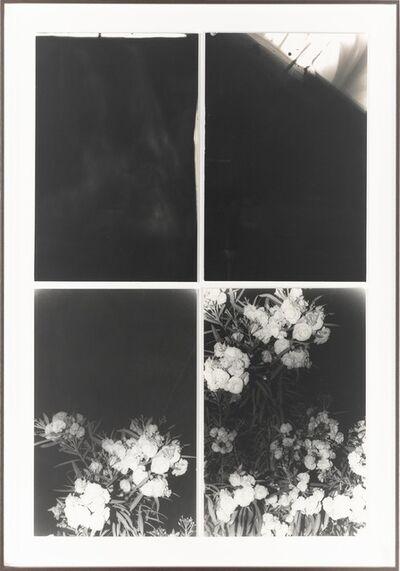 Bruno V. Roels, 'Les Fleurs du Mal', 2017