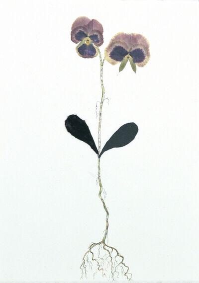 Marilla Palmer, 'Pansy, Velvet and Black Leather', 2017
