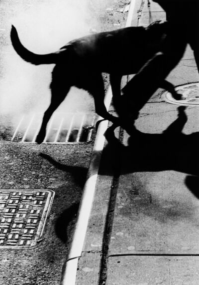 Renato D'Agostin, 'New York (Dog and Gutter)', 2005