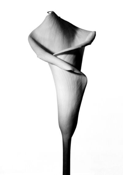 Myron Zabol, 'Lily II', 2006