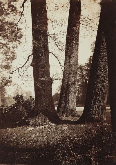 Gustave Le Gray, 'Troncs d'Arbres, Fontainebleau', 1855