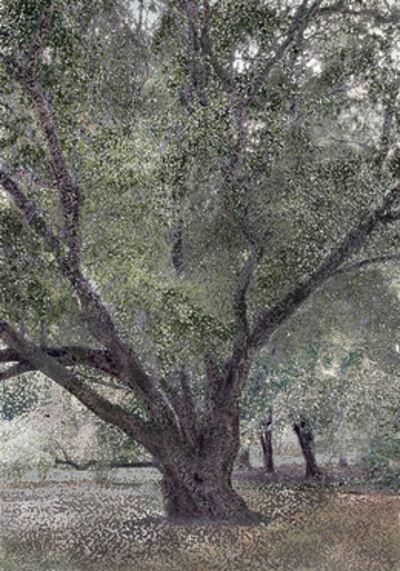 Aziz + Cucher, 'Twisty Tree', 2005