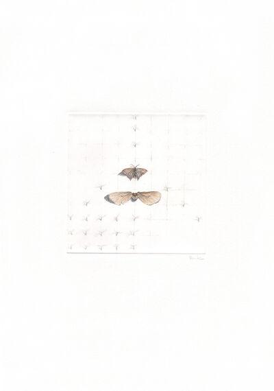 ALEXANDRA KONTRINER, 'schmetterlinge und samen', 2013