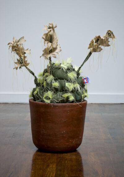 Margarita Cabrera, 'Echinocereus Dasyscan #4', 2012