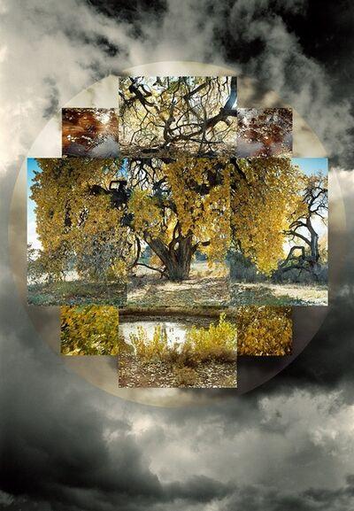 Meridel Rubenstein, 'Fall Seasonal'